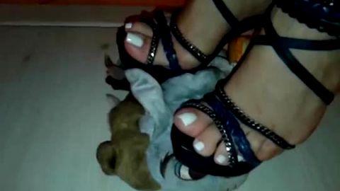 Feet crushing stuffed animal toys